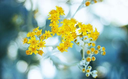 季节缤纷和凋谢 清新治愈系花卉唯美图片