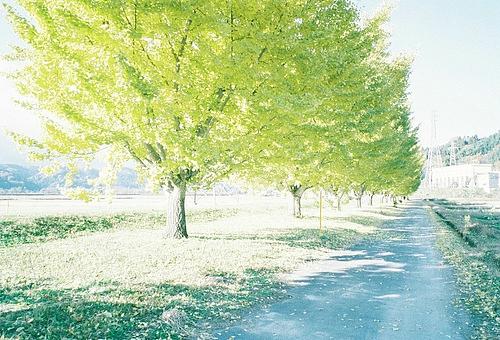 往事成空 皆散于晨雾中 绿色春天唯美意境图片