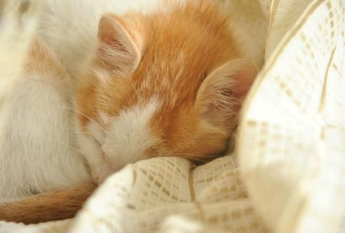 一路走下去  可爱萌猫咪图片