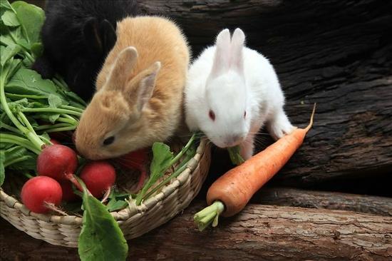 可爱的兔子  微信背景图片