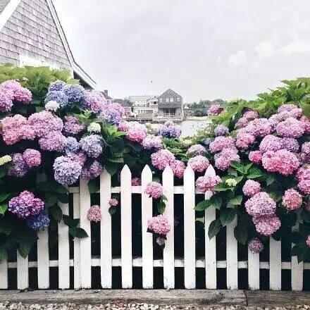 绣球花的花语是希望
