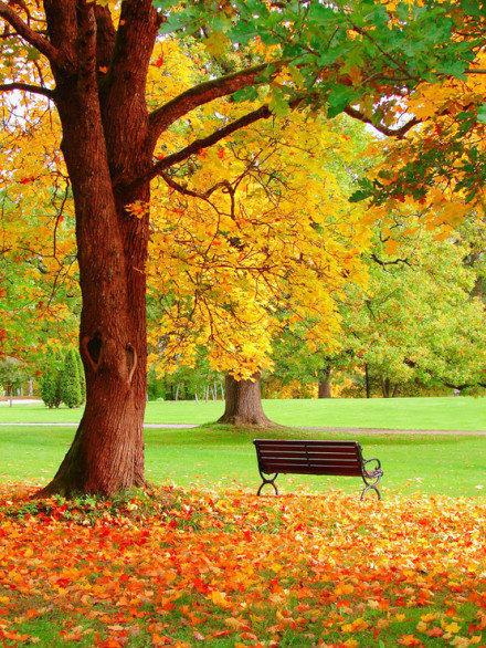 秋叶落,满地殇    唯美落叶意境美图