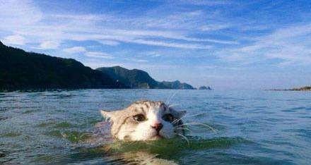 哈希表游泳班-蛙泳初级经验记录