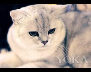 大脸猫瘦脸秘籍 脸部轮廓这么救