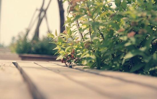 清新自然文艺风景唯美图片精选