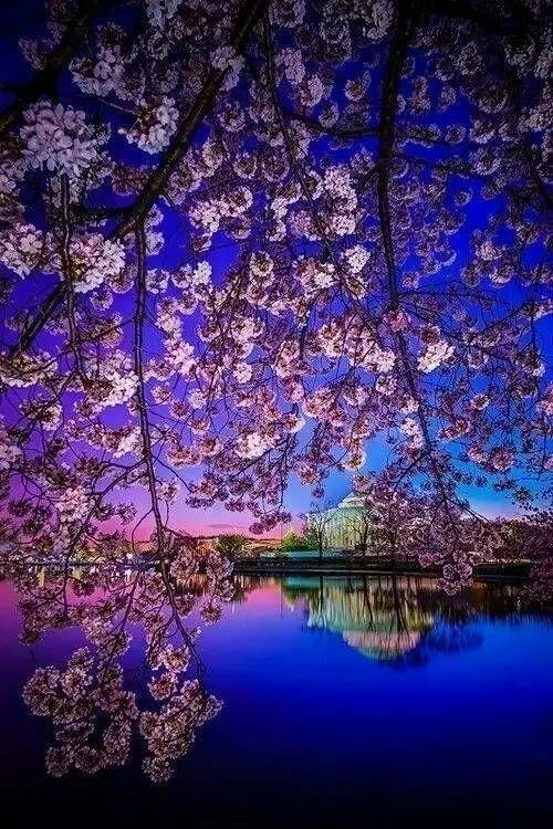 最新美丽的花朵唯美图片大全
