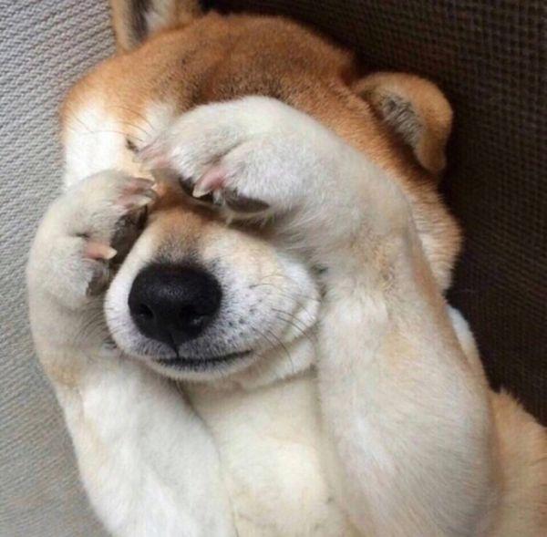 呆萌可爱的萌萌宠物小狗图片