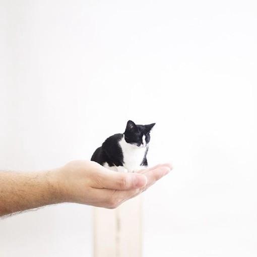 超级可爱的宠物猫咪摄影图片