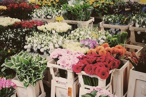 静静的花...